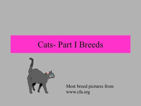 Cats- Part I Breeds Most breed pictures from www.cfa.org.