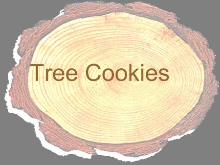 Tree Cookies. They're round. They're full of fiber. But unless you're a termite, you can't eat tree cookies! Tree cookies are cross sections of tree trunks.