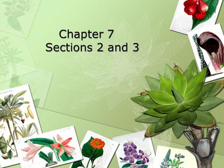 Chapter 7	 Sections 2 and 3.