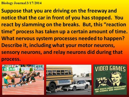 Biology Journal 3/17/2014 Suppose that you are driving on the freeway and notice that the car in front of you has stopped. You react by slamming on the.