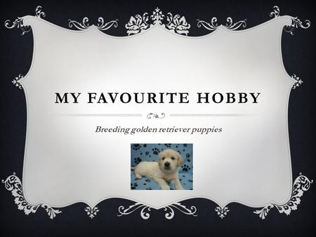 MY FAVOURITE HOBBY Breeding golden retriever puppies.