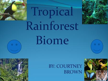 BY: COURTNEY BROWN Tropical Rainforest Biome In the tropical rainforest the climate is warm and humid. An average of 50 to 260 inches of rainfall a year.