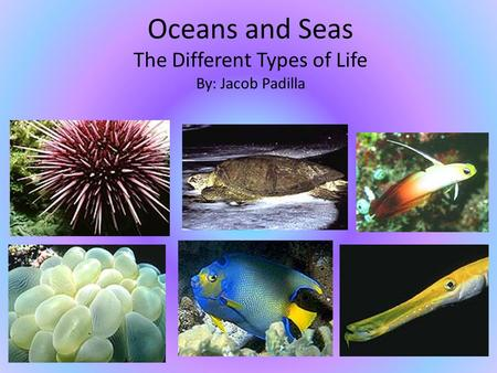 Oceans and Seas The Different Types of Life By: Jacob Padilla.
