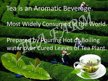 Tea is an Aromatic Beverage. Most Widely Consumed in the World. Prepared by Pouring Hot or Boiling water over Cured Leaves of Tea Plant.