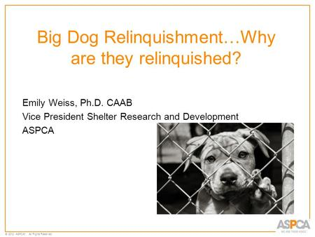 © 2012 ASPCA ®. All Rights Reserved. Big Dog Relinquishment…Why are they relinquished? Emily Weiss, Ph.D. CAAB Vice President Shelter Research and Development.