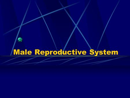 Male Reproductive System. 1. Components: ---testis: produce the male germ cells- gametes(sperm) produce androgen-testosterone ---gernital ducts: store.