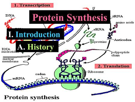 I. Introduction Protein Synthesis A. A. History. a. A. Fourcroy – recognized protein as a class of biological molecules b. J. Mulder – Identified proteins.