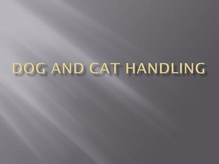 Dog and Cat Handling.