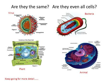 Are they the same? Are they even all cells? Virus Animal Plant Bacteria Keep going for more detail......