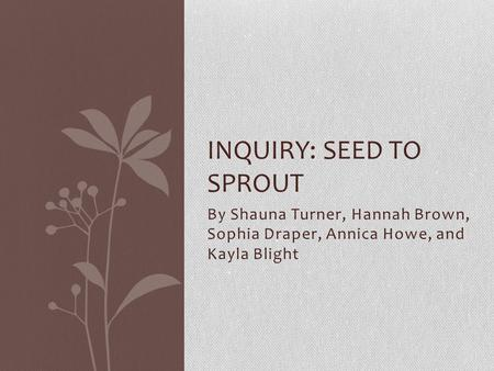 By Shauna Turner, Hannah Brown, Sophia Draper, Annica Howe, and Kayla Blight INQUIRY: SEED TO SPROUT.