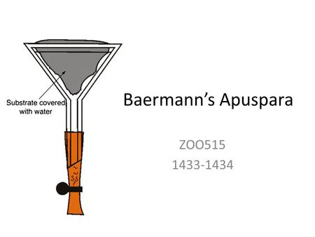Baermann's Apuspara ZOO515 1433-1434. Baermann technique: Purpose  The Baermann technique is used to separate larvae from faecal material. For example: