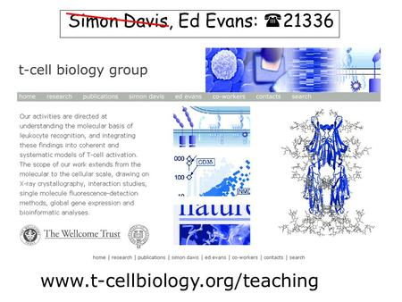 Www.t-cellbiology.org/teaching Simon Davis, Ed Evans:  21336.