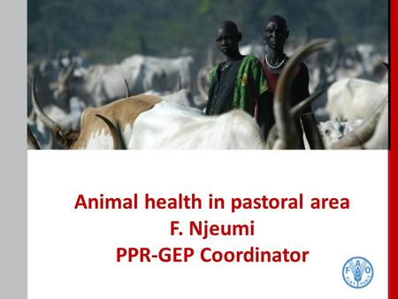 Animal health in pastoral area F. Njeumi PPR-GEP Coordinator.