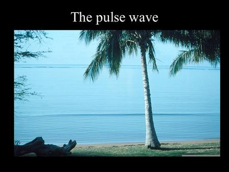 The pulse wave.
