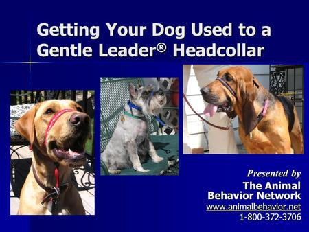 Getting Your Dog Used to a Gentle Leader ® Headcollar Presented by The Animal Behavior Network www.animalbehavior.net 1-800-372-3706.