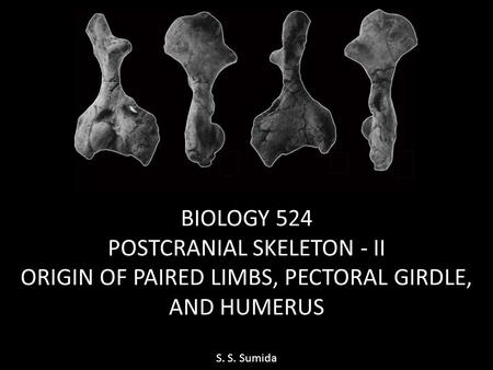 BIOLOGY 524 POSTCRANIAL SKELETON - II ORIGIN OF PAIRED LIMBS, PECTORAL GIRDLE, AND HUMERUS S. S. Sumida.