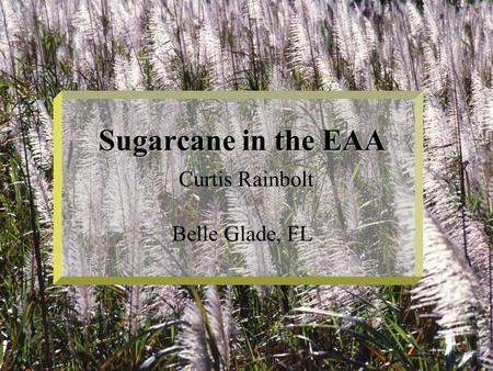Sugarcane in the EAA Sugarcane in the EAA Curtis Rainbolt Belle Glade, FL.