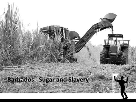 Barbados: Sugar and Slavery Photographer: Neville O. Badenock Copyright holder: Ibo Inc. 2006.