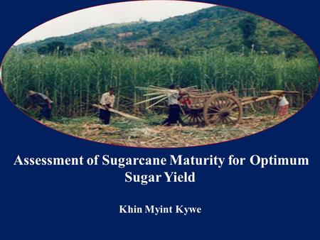 Assessment of Sugarcane Maturity for Optimum Sugar Yield Khin Myint Kywe.