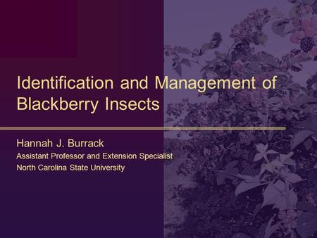 Identification and Management of Blackberry Insects Hannah J. Burrack Assistant Professor and Extension Specialist North Carolina State University.