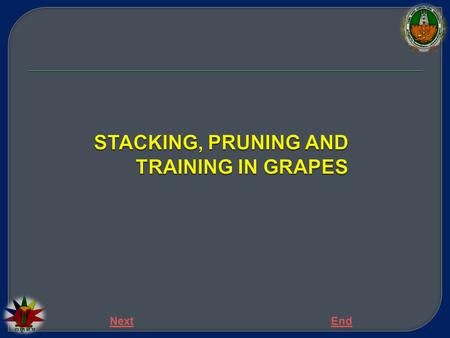 STACKING, PRUNING AND TRAINING IN GRAPES