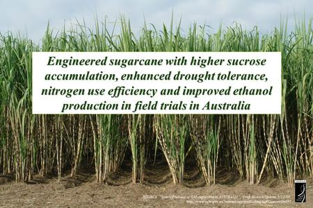 "SOURCE: ""Limited release of GM sugarcane in AUSTRALIA"", Crop Biotech Update, 5/22/09,"