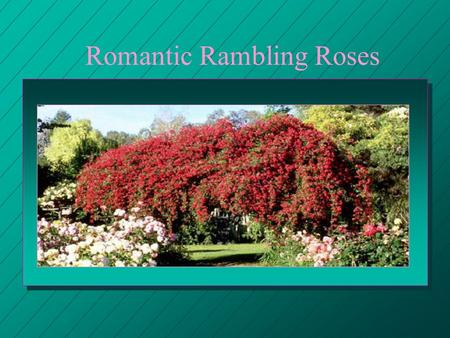 Romantic Rambling Roses. presentation created by Jolene Adams This Program Services Committee.