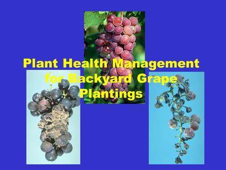 Plant Health Management for Backyard Grape Plantings.