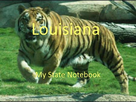 My State Notebook Louisiana. Scenery From Our State.