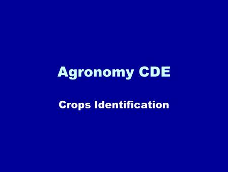 Agronomy CDE Crops Identification. Choose Correct answer A. Orchardgrass B. Tall Fescue C. Bermuda grass D. Timothy Click to see correct answer.