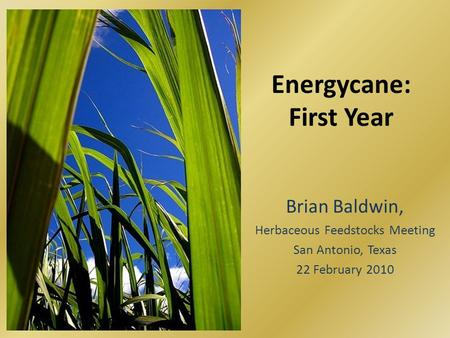 Energycane: First Year Brian Baldwin, Herbaceous Feedstocks Meeting San Antonio, Texas 22 February 2010.