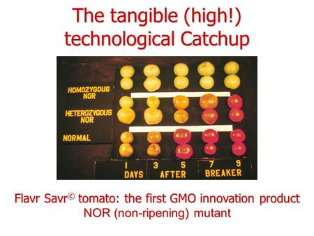 The tangible (high!) technological Catchup Flavr Savr © tomato: the first GMO innovation product NOR (non-ripening) mutant.