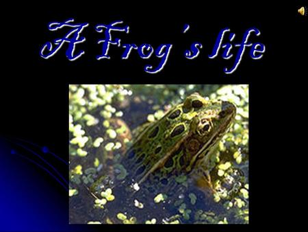 A Frog's life. Life cycle of a frog First the frogs are like small round jellies.Then they become small tadpoles. Tadpoles are aquatic, lack front or.