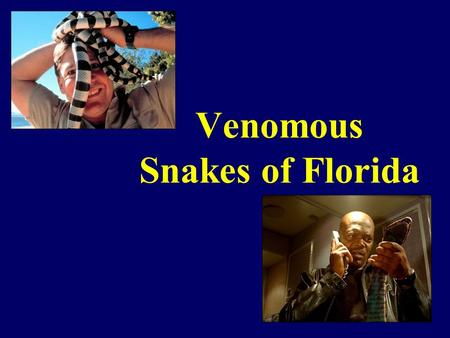 Venomous Snakes of Florida. SNAKES!!!!!!! Introduction Most snake bites caused by non venomous snakes 120 Known species in North America 20 Venomous to.