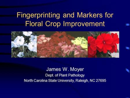 Fingerprinting and Markers for Floral Crop Improvement James W. Moyer Dept. of Plant Pathology North Carolina State University, Raleigh, NC 27695.