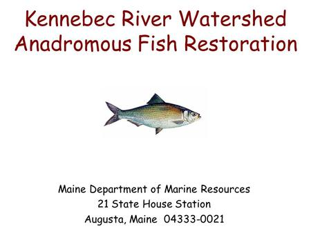 Kennebec River Watershed Anadromous Fish Restoration Maine Department of Marine Resources 21 State House Station Augusta, Maine 04333-0021.