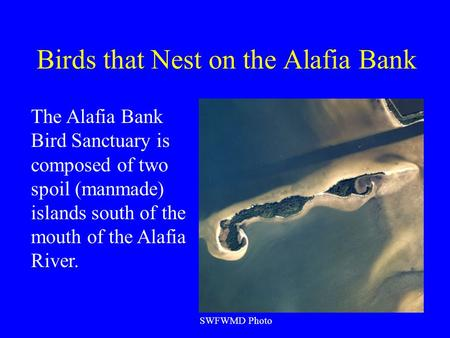 Birds that Nest on the Alafia Bank SWFWMD Photo The Alafia Bank Bird Sanctuary is composed of two spoil (manmade) islands south of the mouth of the Alafia.
