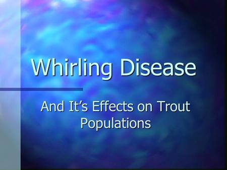Whirling Disease And It's Effects on Trout Populations.