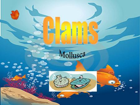 Clams come in many colors, including shades of brown, red-brown, yellow and cream They have shells consisting of two halves The halves are connected at.