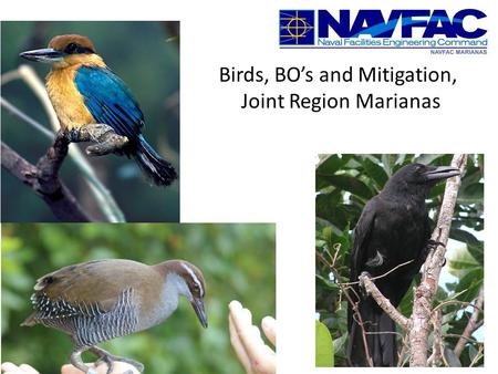 Birds, BO's and Mitigation, Joint Region Marianas.