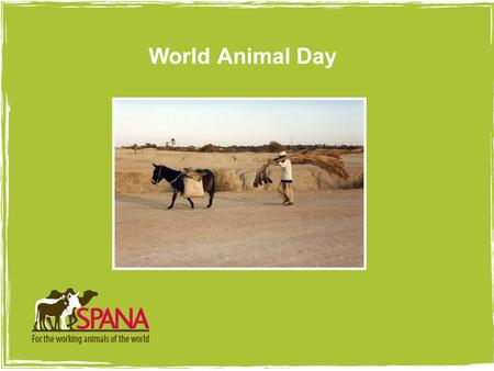 Picture goes here with 4pt white border World Animal Day.