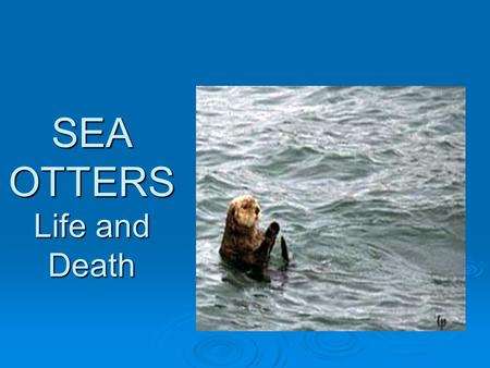 SEA OTTERS Life and Death