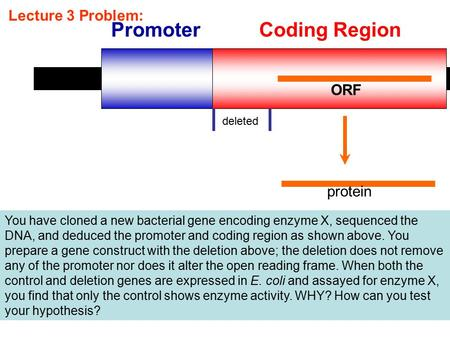 Lecture 3 Problem: PromoterCoding Region ORF deleted protein You have cloned a new bacterial gene encoding enzyme X, sequenced the DNA, and deduced the.