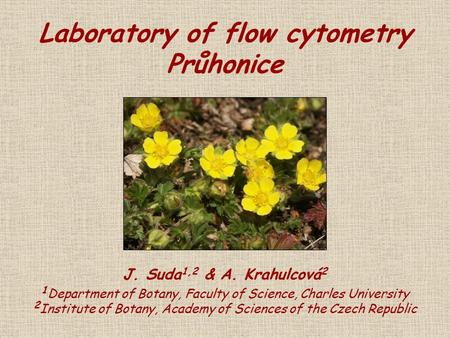 Laboratory of flow cytometry Průhonice J. Suda 1,2 & A. Krahulcová 2 1 Department of Botany, Faculty of Science, Charles University 2 Institute of Botany,