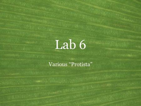 "Lab 6 Various ""Protista"". Dictyosteliomycota Common name: Cellular slime molds Synonyms: Acrasiomycota (in part) Mode of nutrition: Heterotrophic: ingestive."