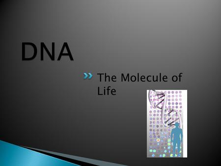 The Molecule of Life.  Carry the instructions to build proteins  Carry hereditary instructions from one generation to the next.  Nucleic acids are.