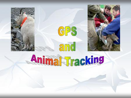 Using radio tags to study the physiology, behavior, and demography of animals Telemetry- the transmission of information through the atmosphere usually.