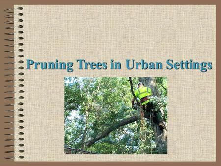 Pruning Trees in Urban Settings. Next Generation Science/Common Core Standards Addressed! WHST.9 ‐ 12.7 Conduct short as well as more sustained research.
