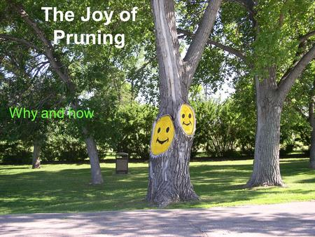 The Joy of Pruning Why and how. The Joy of Pruning Why.