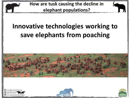 Innovative technologies working to save elephants from poaching How are tusk causing the decline in elephant populations?